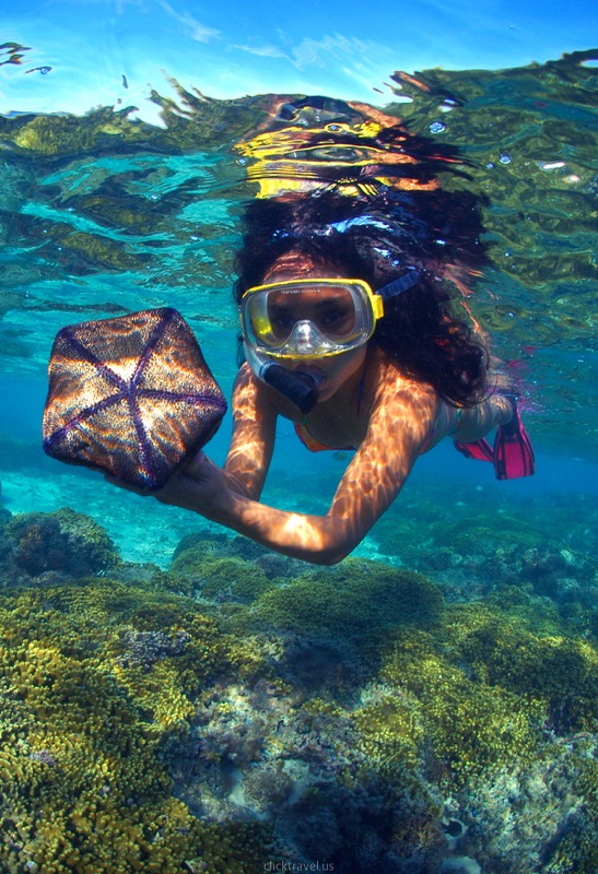 Snorkeling with Observatory & Lunch