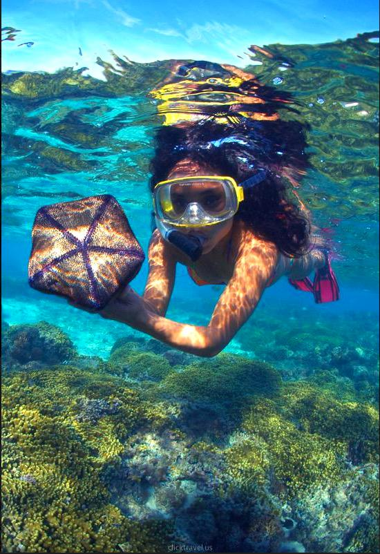 Snorkeling with Observatory & Lunch (NTR)